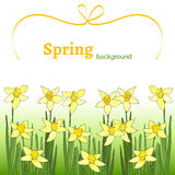 Spring background with yellow narcissus. Template with spring flowers with watercolor texture. Spring background with yellow narcissus. Spring sale. Poster with Stock Images