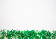 Spring background with young green plants and leaves on white background top view copy space frame stock illustration