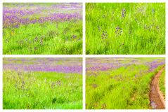 Spring Backgrounds Collage Royalty Free Stock Photo