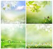 Spring backgrounds Stock Photography