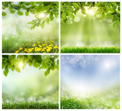 Spring backgrounds Royalty Free Stock Photo