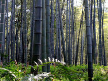 Spring bamboo Stock Images