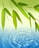 Spring bamboo  and water background Stock Image