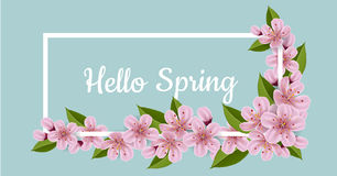 Spring banner with cherry flowers and frame. Spring banner with pink cherry flower and leaf, with white frame. Hello Spring message Stock Image