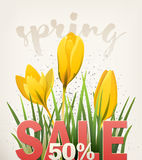 Spring banner with crocus Stock Image