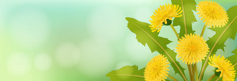 Spring banner with dandelion flower. Horizontal spring banner with yellow dandelion flower and leaf Royalty Free Stock Photography