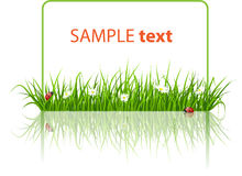 Spring banner with grass and ladybird royalty free illustration
