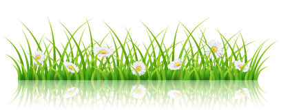 Spring banner with green grass and white daisy flowers. Horizontal spring banner with green grass, and white daisy flower,  on white background. Realistic vector Stock Images