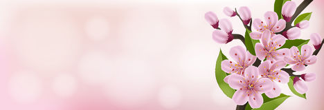 Spring banner with pink cherry flower and leaf. Horizontal spring banner with pink cherry flower, bud and leaf, on pink background Stock Photos