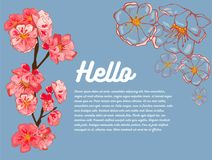 Spring banner. Pink sakura flowers, outlines of flowers. Hi! In the background there is room for your text. vector illustration