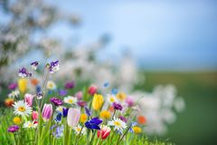Spring banner with wild flowres Stock Image