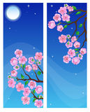 Spring banners. Two spring banners with blossom branch in night Stock Photos