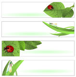 Spring Banners. Vector illustration of  Beautiful Spring Banners or Backgrounds with funny ladybugs and dragonflies Stock Photography