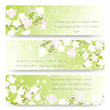 Spring banners with blossoming tree brunch Royalty Free Stock Image