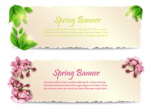 Spring banners with leaves and flowers. Vector. Spring banners. Two ripped piece of paper with green leaves and pink flowers. Vector illustration isolated on Royalty Free Stock Images
