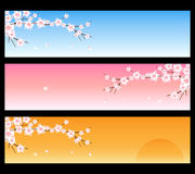 Spring banners - sakura. Set of three spring banners with branches of sakura, isolated on black.EPS file available Stock Photos