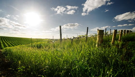 Spring in the Barossa Valley. Barossa Valley vineyard in the spring royalty free stock photography