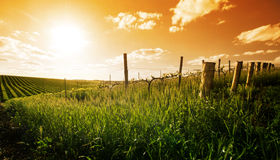 Spring in the Barossa Valley. Barossa Valley sunset in the spring Royalty Free Stock Photos