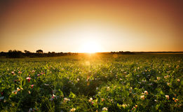 Spring in the Barossa Valley. Barossa Valley sunset in the spring Stock Photo