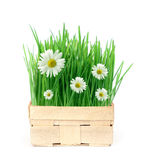 Spring in a basket Stock Photo