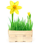 Spring in a basket Stock Image