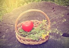 Spring basket with heart shape Stock Photography