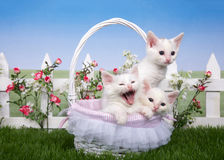 Spring basket with three white kittens in a garden stock image