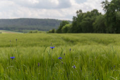 Spring in bavaria Royalty Free Stock Image