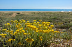 Spring beach Stock Photo