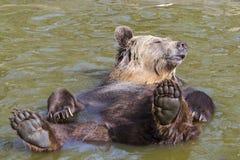 Spring Bear Bath Royalty Free Stock Image