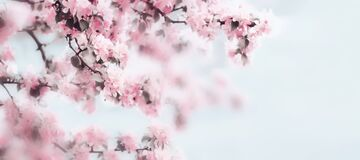 Free Spring Beautiful Blossom Background Stock Photo - 211806790