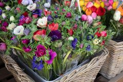 Spring. Beautiful bouquets of Anemone coronaria flowers in red, blue, violet, white colors in the garden shop. Horizontal. Close-up royalty free stock photography