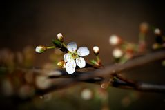 Spring. Beautiful contrast between white and brown color royalty free stock images