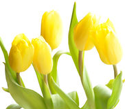 The spring beautiful flowers Stock Photography