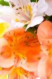 Spring beautiful flowers. Royalty Free Stock Photos