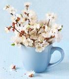 Spring. Royalty Free Stock Photo