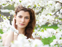 Spring beauty Royalty Free Stock Photo