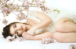 Spring beauty Stock Photography