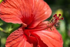 Spring Beauty. A beautiful macro photography of a flower during the spring royalty free stock images