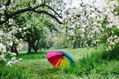 Colorful rainbow-umbrella in the blooming garden. Spring, outdoors. Spring beauty concept. Freshness in blooming garden. Rainbow umbrella on the grass royalty free stock photography