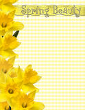Spring Beauty Page Stock Photos