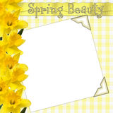Spring Beauty Page Stock Photo