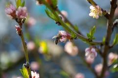 Spring bee on tree Stock Image