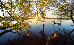 Spring. Beech trees that hang out over a lake Stock Image