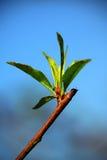 Spring begining Royalty Free Stock Images
