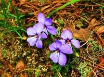 Spring Begins Stock Photos