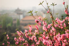 Spring in Beijing Stock Image