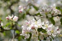 Spring. Belarus. Minsk. Loshitskiy Park. Spring in the city royalty free stock photo