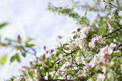 Spring. Belarus. Minsk. Loshitskiy Park. Spring in the city royalty free stock photos