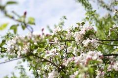 Spring. Belarus. Minsk. Loshitskiy Park. Spring in the city royalty free stock images